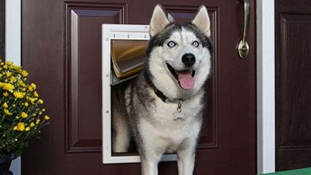 Dog Door Installer in Orangeburg